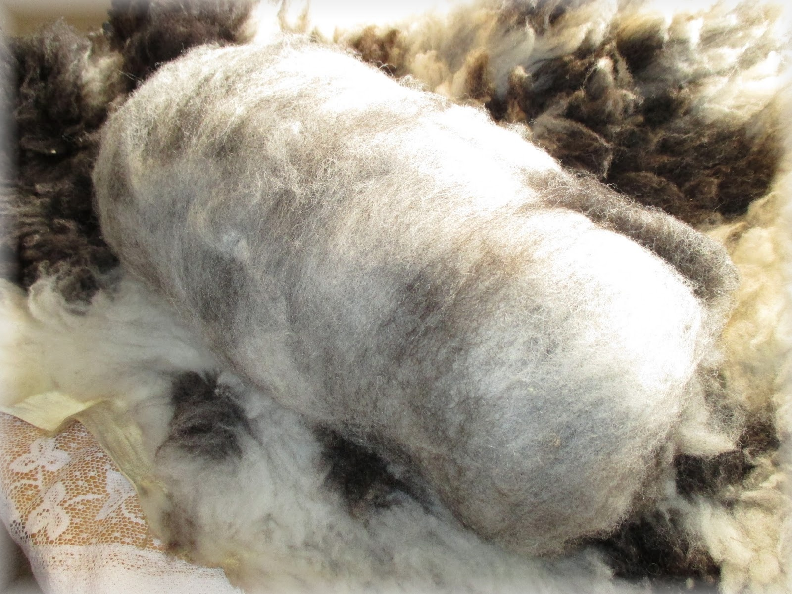 ovce-vlna